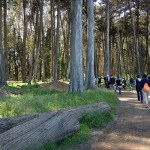 Touring The Presidio Forest