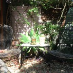 A sunny and shady garden