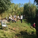 Greenlea Nursery: gardeners and designers learn native and drought-adapted plants