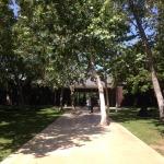 Norton Simon Museum: Sycamores planted informally