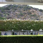 The Getty: manicured hedges and scrub-filled hillsides